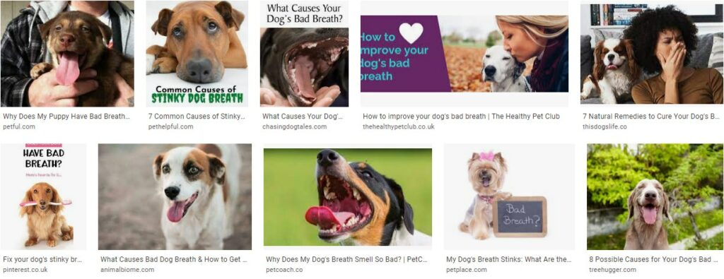 Why Does Your Dog Have Smelly Breath
