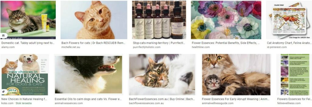 Using Flower Essences with Cats