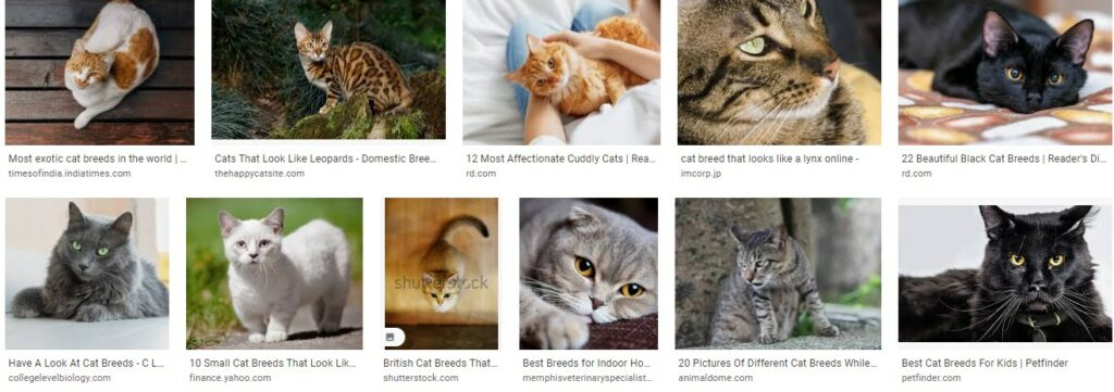 Best food for bengal cats