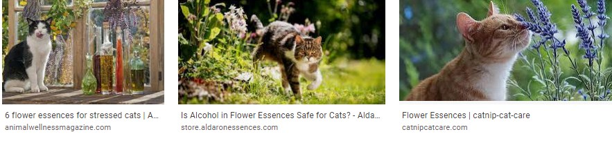 Blower essences for cats review - rescue remedy for cats