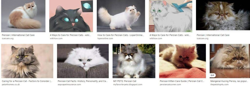 How to take care of persian cats - how to look after persian cats