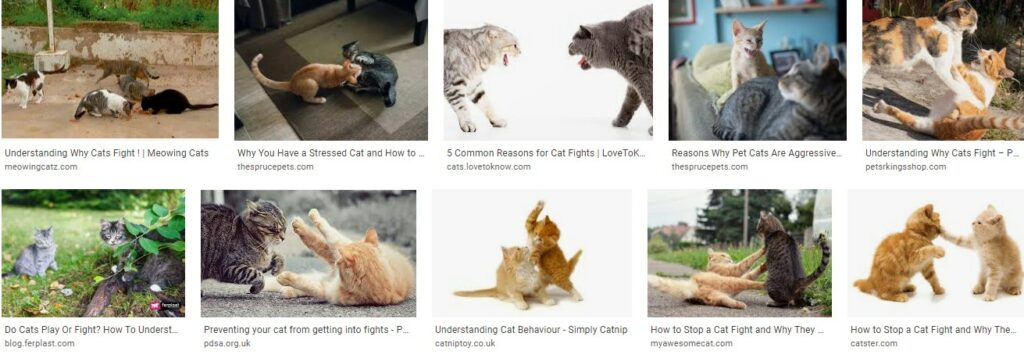 Understanding Why Cats Fight