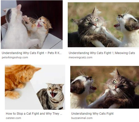 Why do cats fight outside - do female cats fight each other