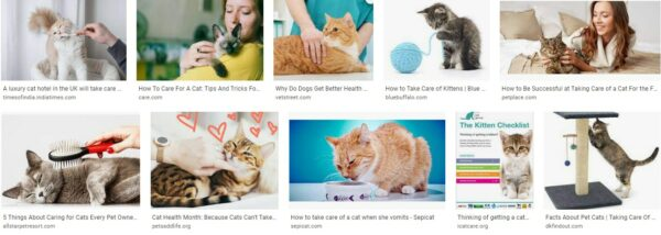 Taking Care Of Cats