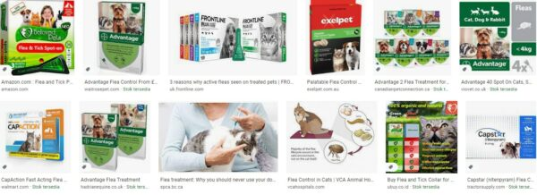 Flea Control With Cats and Dogs