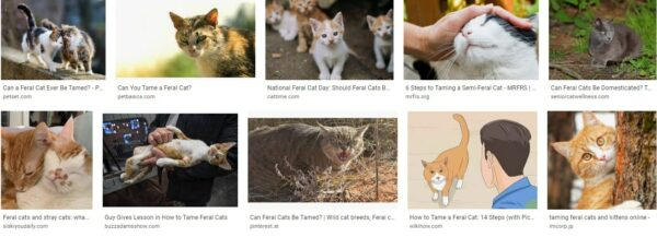 Can Feral Cats Be Tamed