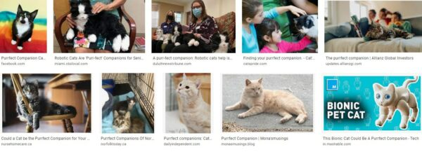 Cats – The Purrfect Companion?