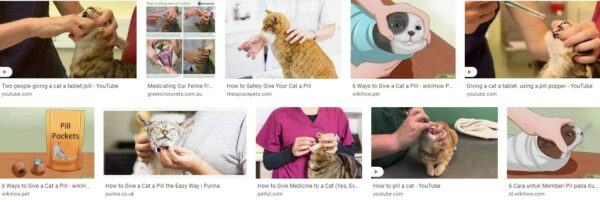 Can Cats Take Pills-Tablets?