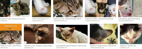 Cats And Ringworm