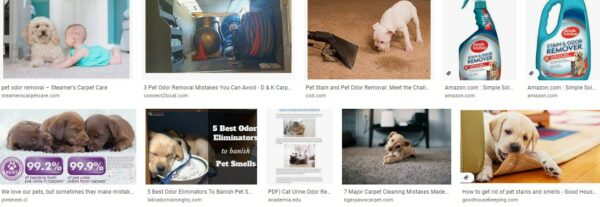 Common Pet Odor Removing Mistakes