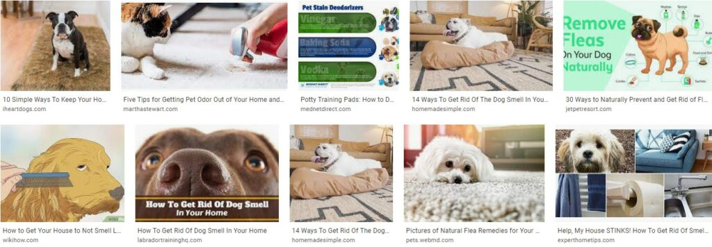 Getting Rid of Pet Odors in Your Home That Is Lurking