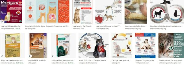 Heartworm Treatment For Cats