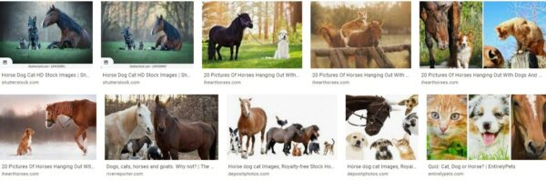 Dogs, Cats, And Horses… We Love Them All!