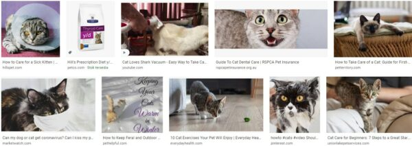 How to keep cat healthy-why are all the cats healthy