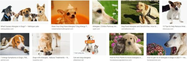 Inhalant Allergies In Dogs And Cats