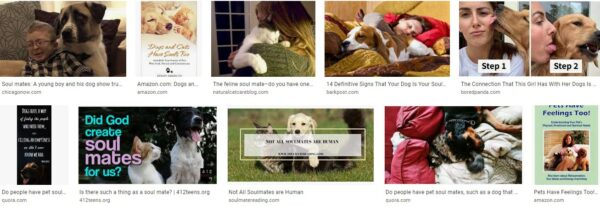 Cats & Dogs – Soul Mates?