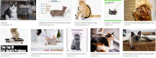 Older cat health problems-common injuries for cats-common diseases-in cats australia-feline health
