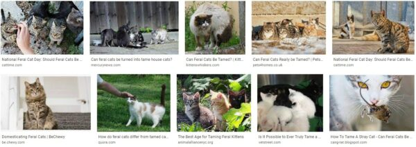 Stray cat vs feral cat-how to get feral cat to like you