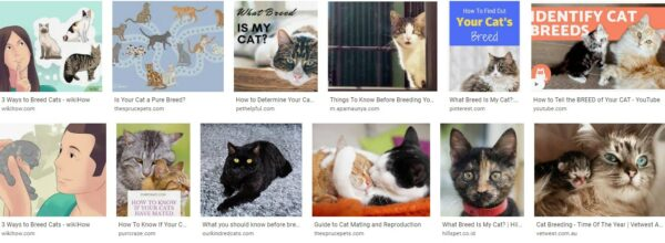 Things To Know Before Breeding Your Cat