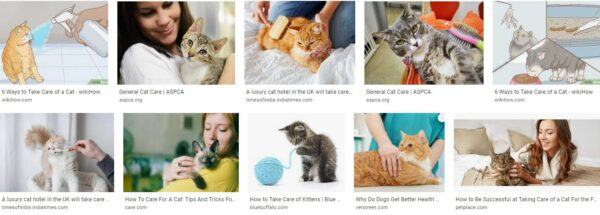 Tips how to take care of a cat 1 pay attention to your cat - a description of cats in general