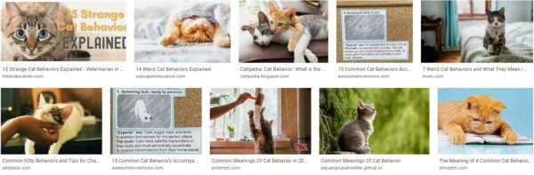 Common Meanings Of Cat Behavior