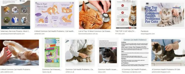 Health Problems In Cats