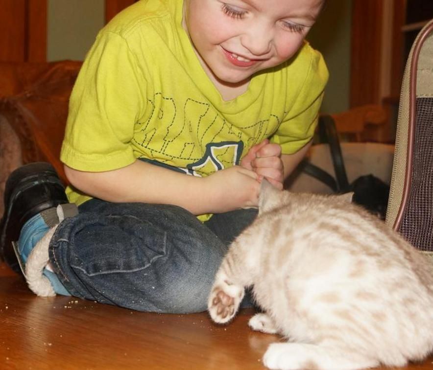 Maine Coon Kittens For Sale Rochester Mn