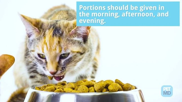 What Can Kittens Eat And Drink
