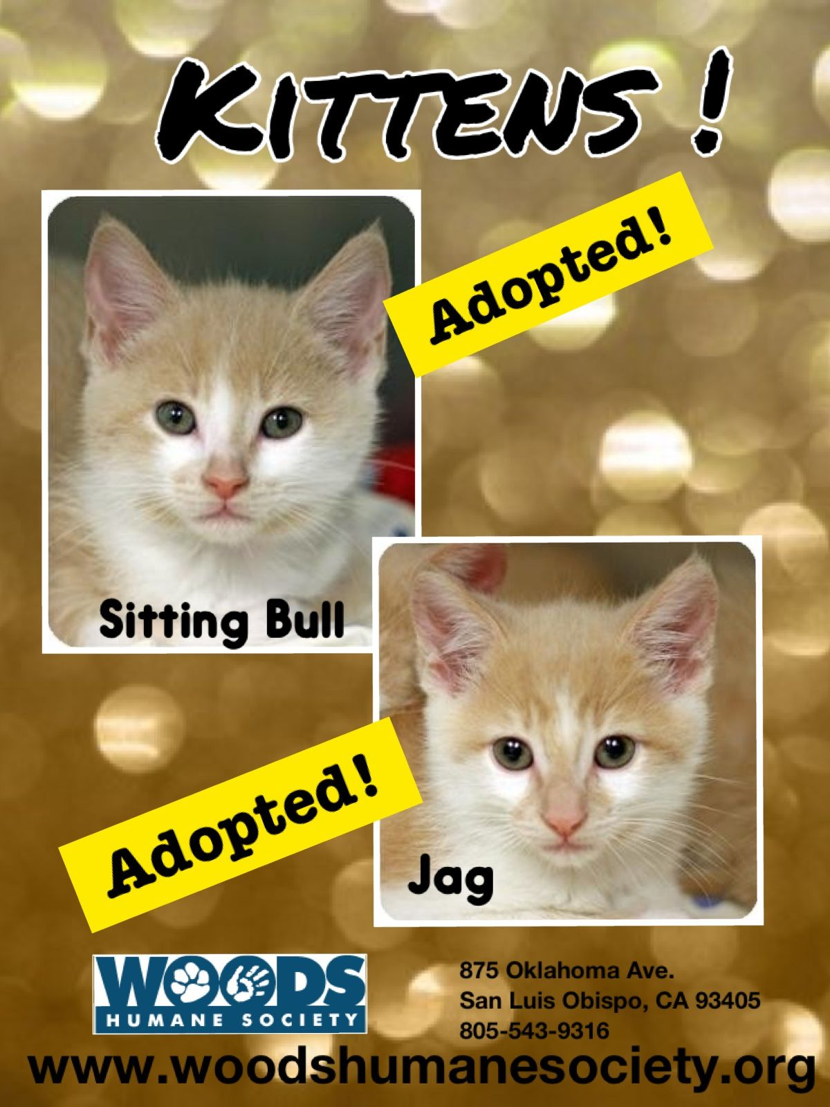 How To Foster Kittens In San Diego