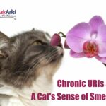 Antibiotics For Kittens With Upper Respiratory Infection
