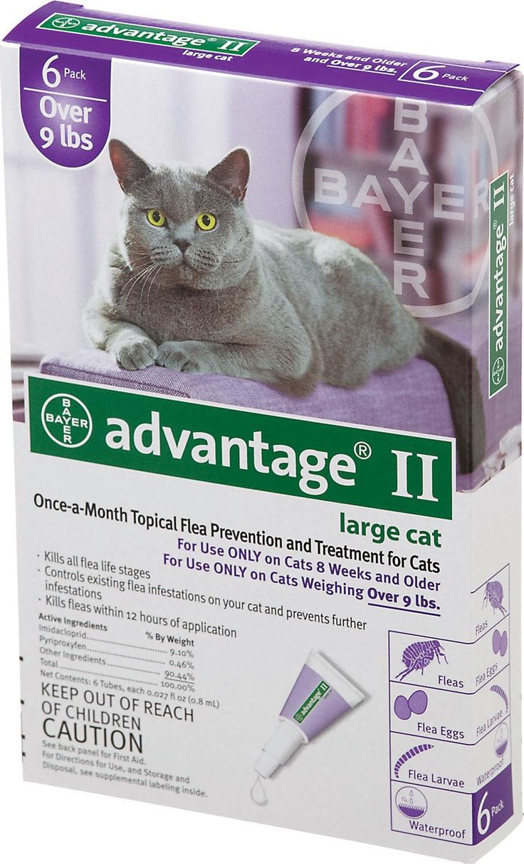 Is Advantage 2 Safe For Kittens
