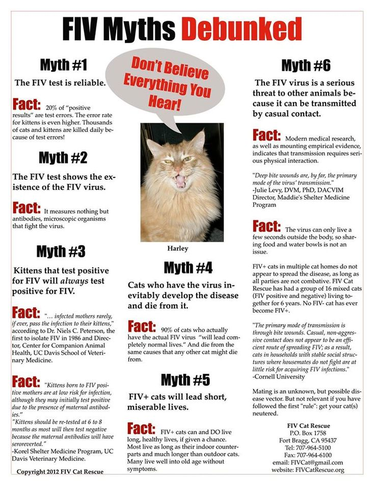How Common Is Fiv In Kittens