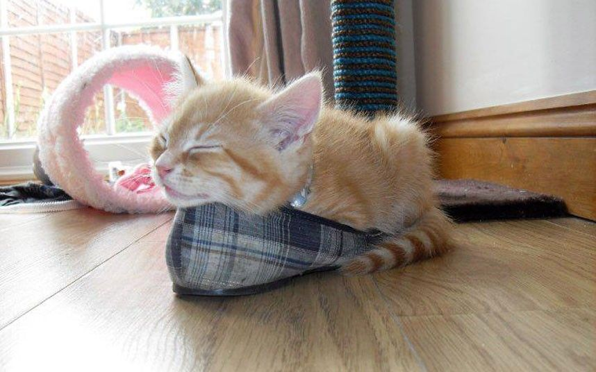 How Much Do Kittens Sleep At 10 Weeks