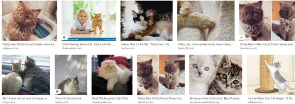 Happy Cats at Home – Reception
