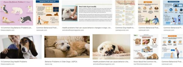 Behavioral and Health Related Problems for Dogs