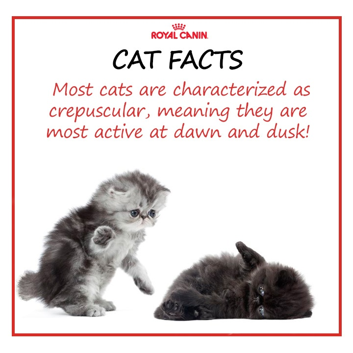 Facts About Kittens And Puppies
