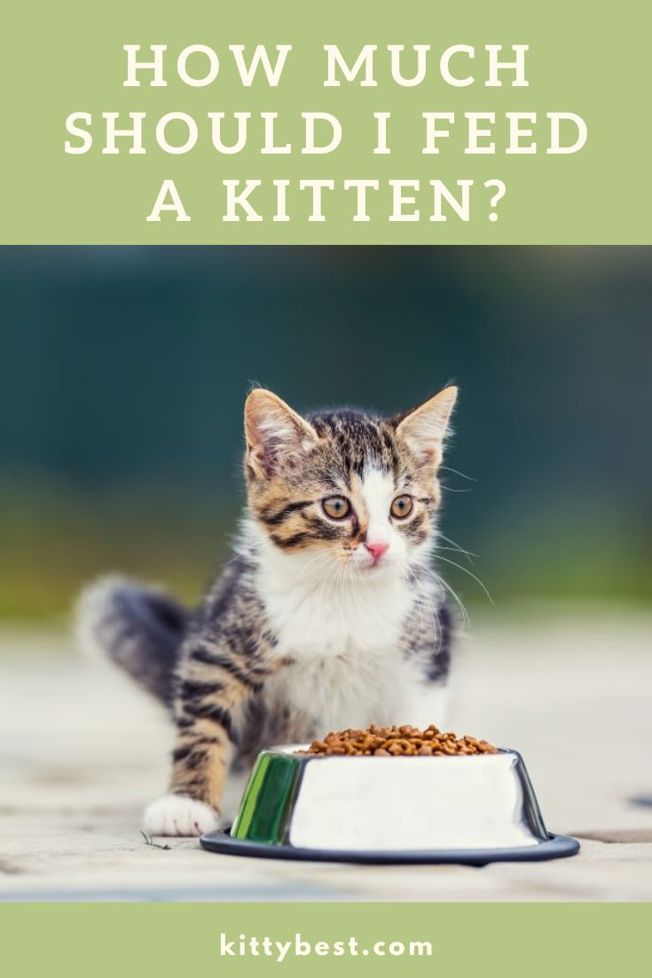 What Should You Feed Baby Cats