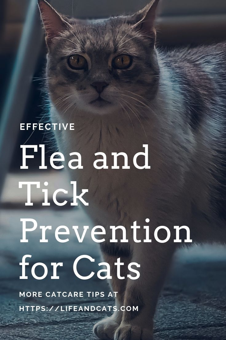 What Flea Treatment Can Be Used On Kittens