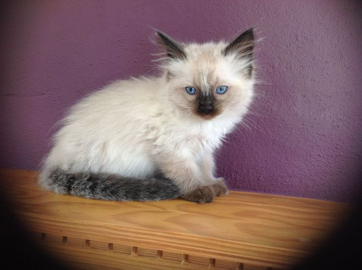 Kittens For Sale In Nh Craigslist
