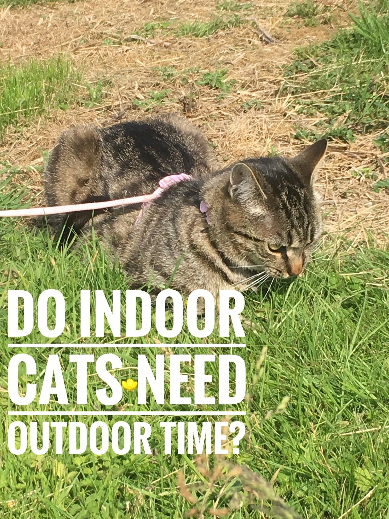 What Injections Do Indoor Cats Need