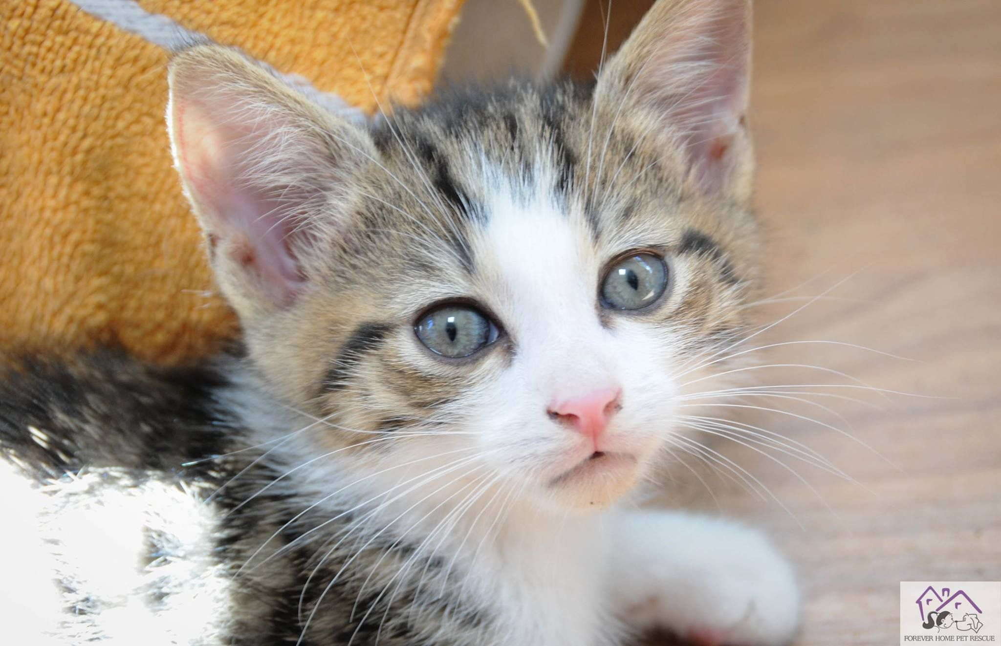 Can Kittens Be Adopted At 6 Weeks
