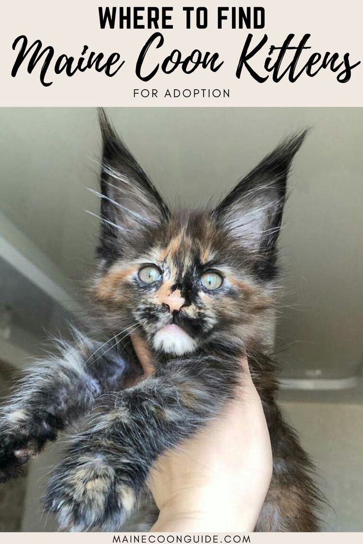 Where Can I Get Free Kittens Near Me