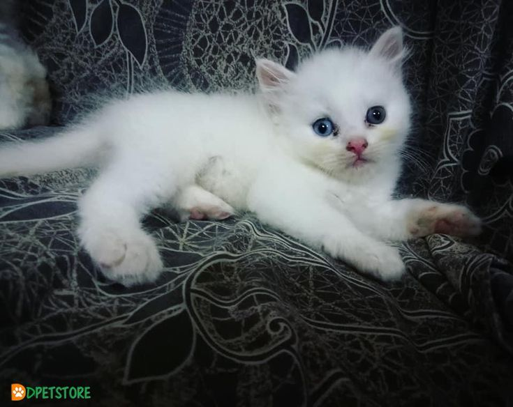 Kittens In Ct For Sale
