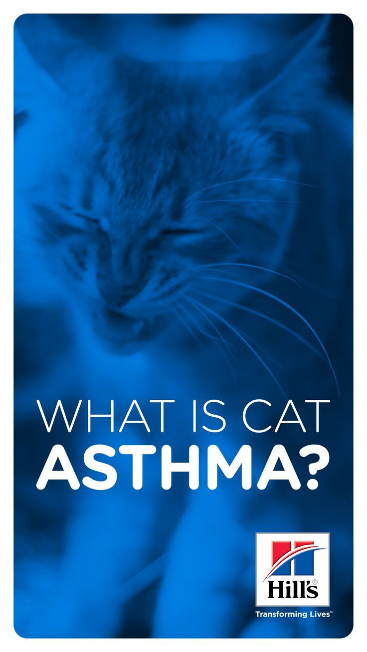 Best Cat Litter For Cats With Asthma