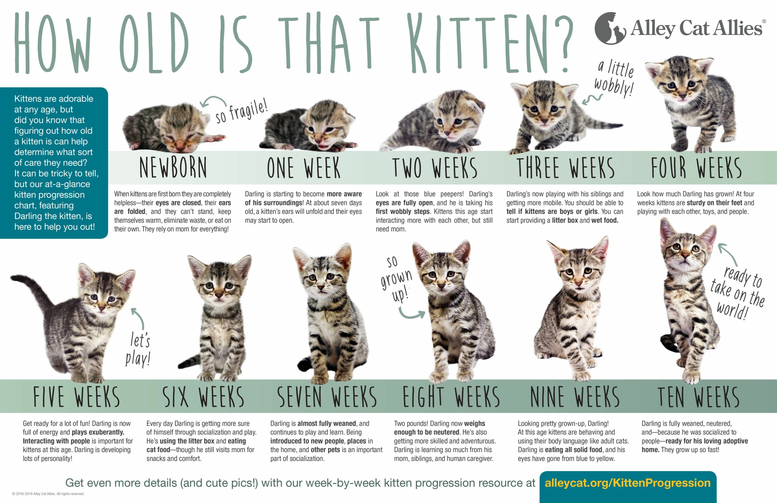 What Do Kittens Eat At 4 Weeks