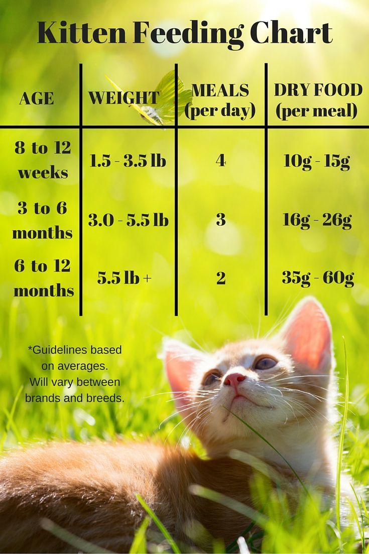 How To Get Cat To Eat New Wet Food